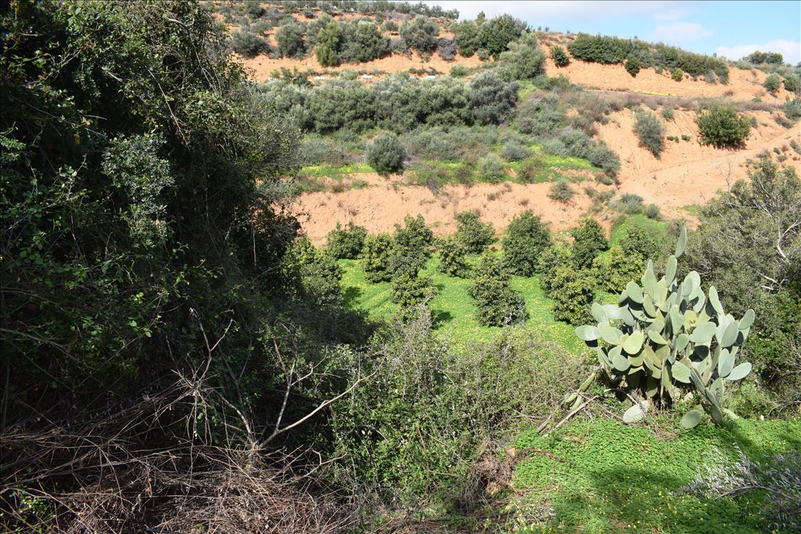 Купить участок земли на крите греция строительство